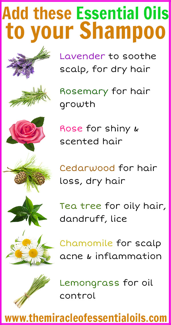 7 Essential Oils To Add To Your Shampoo The Miracle Of