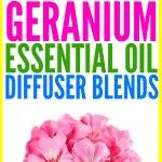 15 Best Geranium Essential Oil Diffuser Blends
