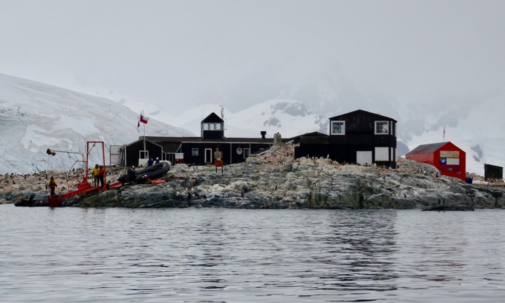 Antarctica Day 4: Waterboat Point, Gentoo Penguin Chicks & Mailing A Postcard