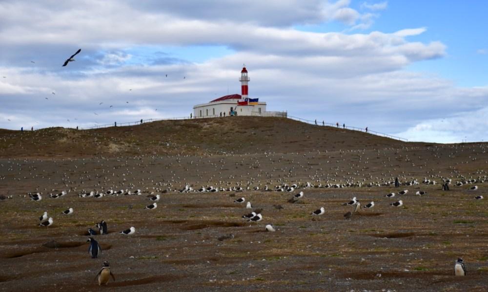 Punta Arenas, Chile: Magdalena Island & The Magnificent Magellanic Penguins