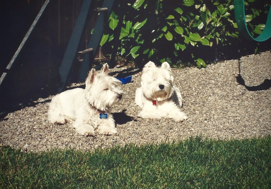The Modern Postcard Travel Blog Notes from Home: A Dog's Love and