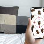 Have you find blood spots on your bed sheets and bite marks on your skin? These could mean you have a bed bug infestation at home. Fear not! Here are some safe and effective ways to solve this problem once and for all.