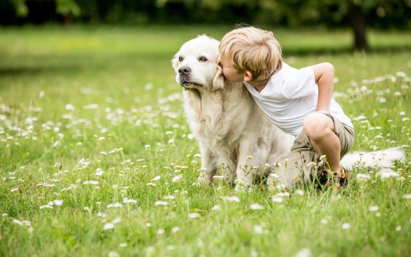 Top 10 Ways Dogs Help People with Autism