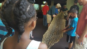 St. Louis Zoo - Safari Tour