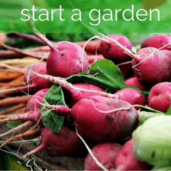 Grow Your Own Food to Save Money