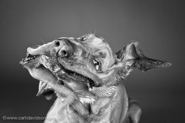 Shaking Dogs By Carli Davidson