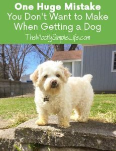 One Huge Mistake You Don't Want to Make When Getting a Dog