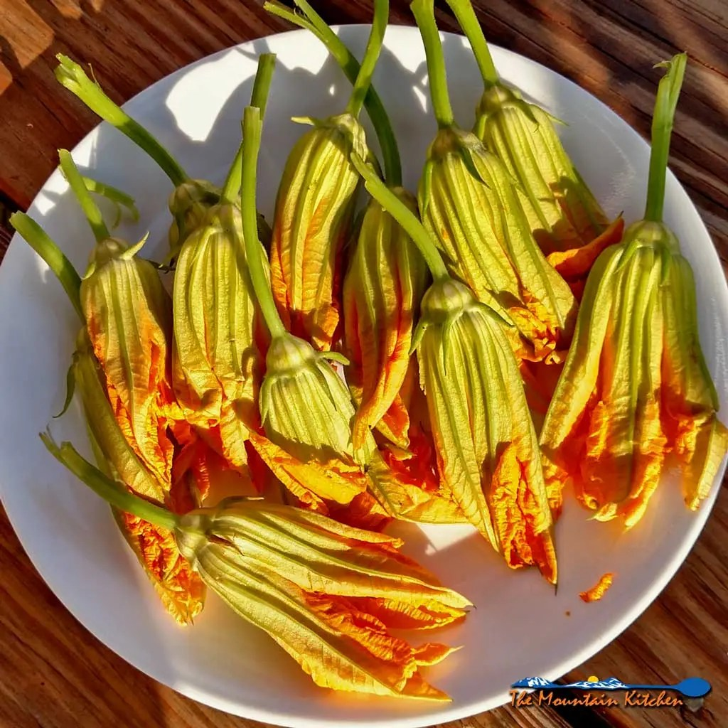 Fried Squash Blossoms Stuffed With Cheese