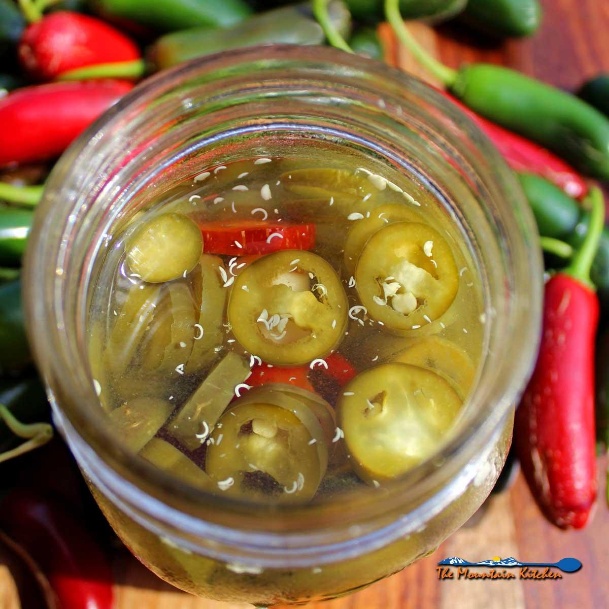 Pickled Jalapenos {Pickle Your Jalapeno Harvest