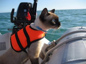 Baily Boat Cat Follow his adventures on: Facebook Twitter - Cute Kitty Blogs