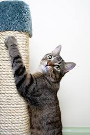 Vertical Scratcher - cat scratching ideas