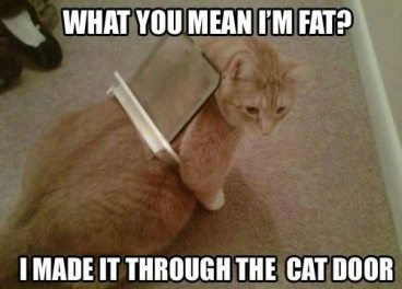 Weight Loss Tips for a fat cat - cat flap meme