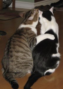 Adventures in Cat Fostering - Slippery Slope Blog - Cute Kitty Blogs