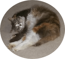 Long Hair Cat Grooming tips and ideas - especially for difficult felines