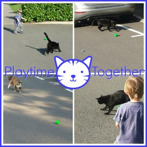 Playtime together - Cats vs toddlers