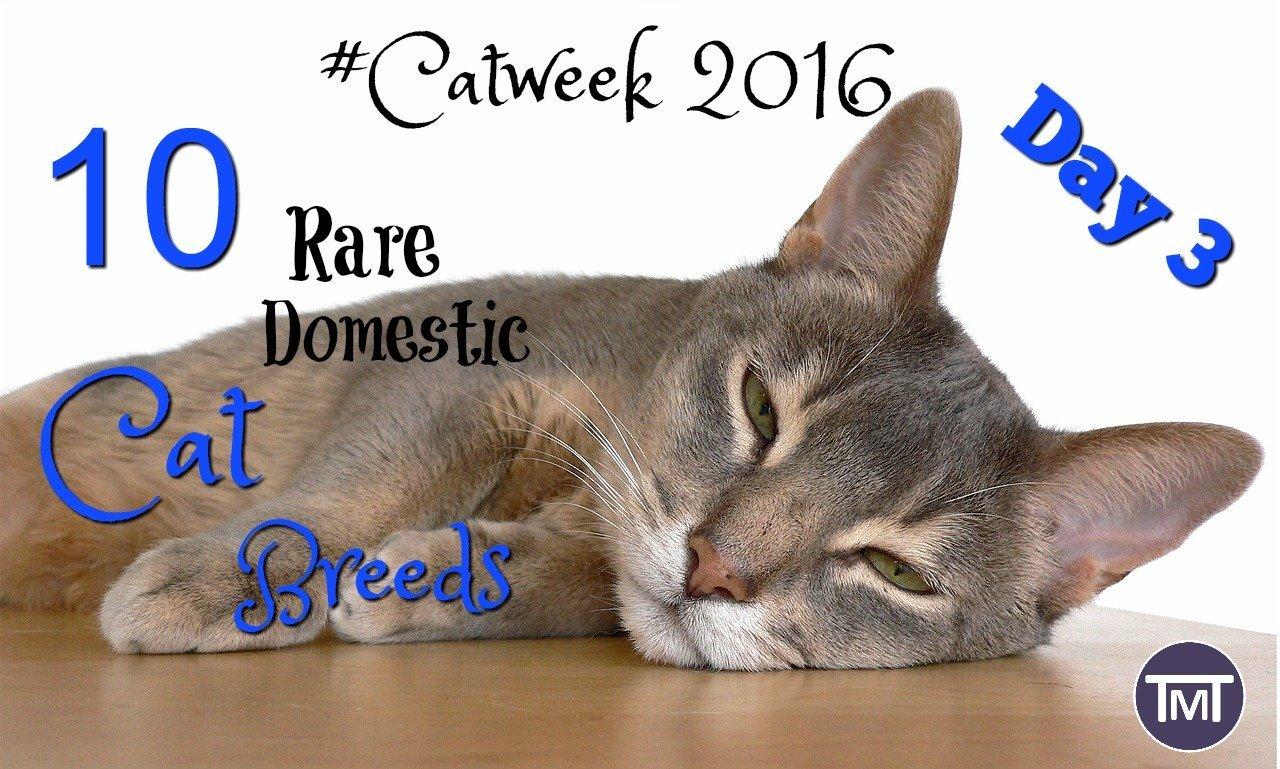 10 Rare Domestic Cat Breeds