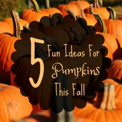 Struggling with ideas for pumpkins this year? Here are some fun and interesting ways to mix it up, plus some recipes too for using your pumpkins this fall.