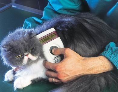Should you microchip your cat?