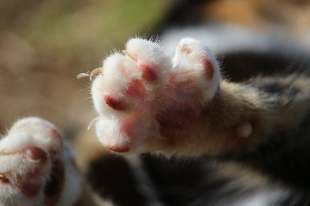 Cat claw care tips