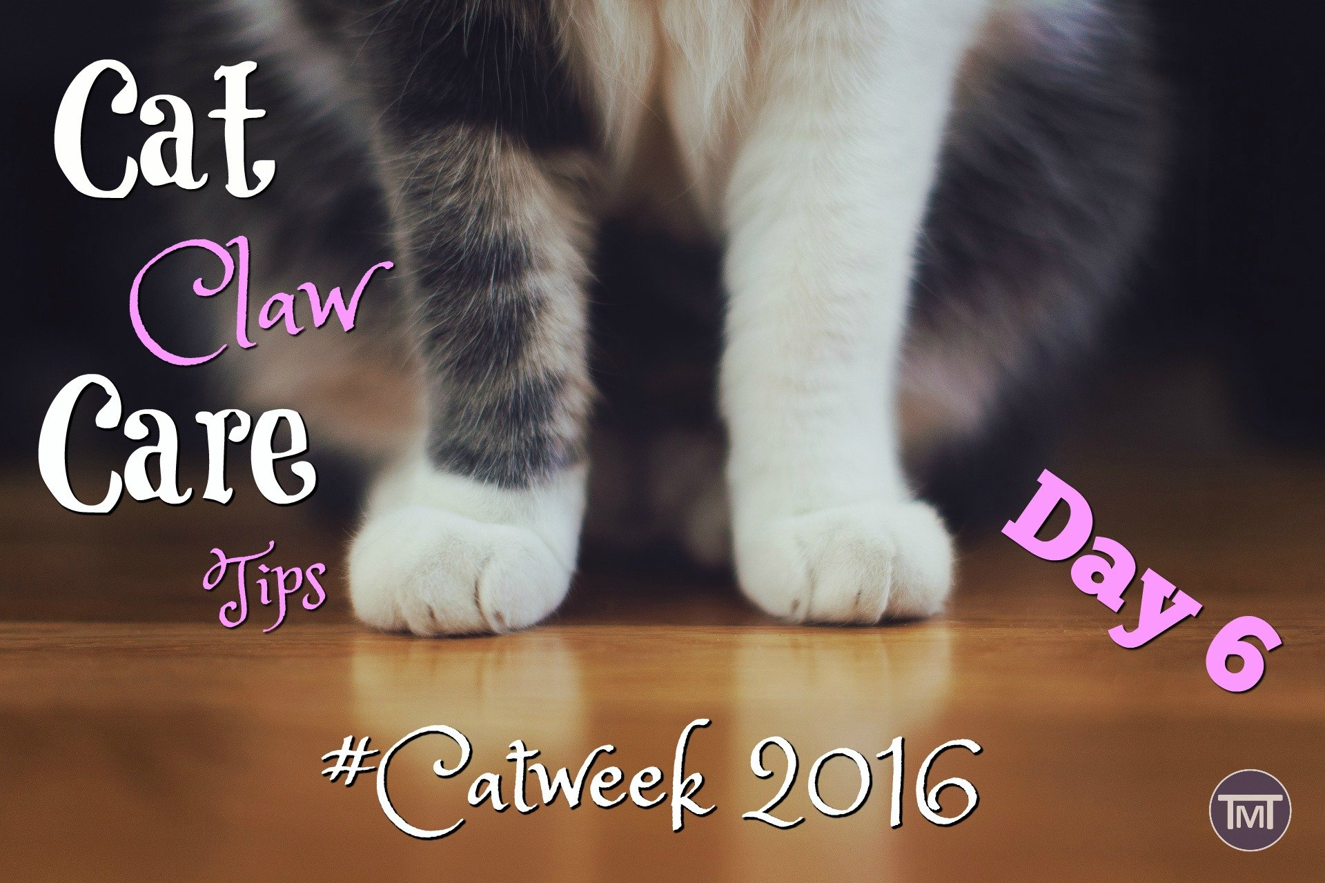Cat Claw Care Tips | The Mummy Toolbox