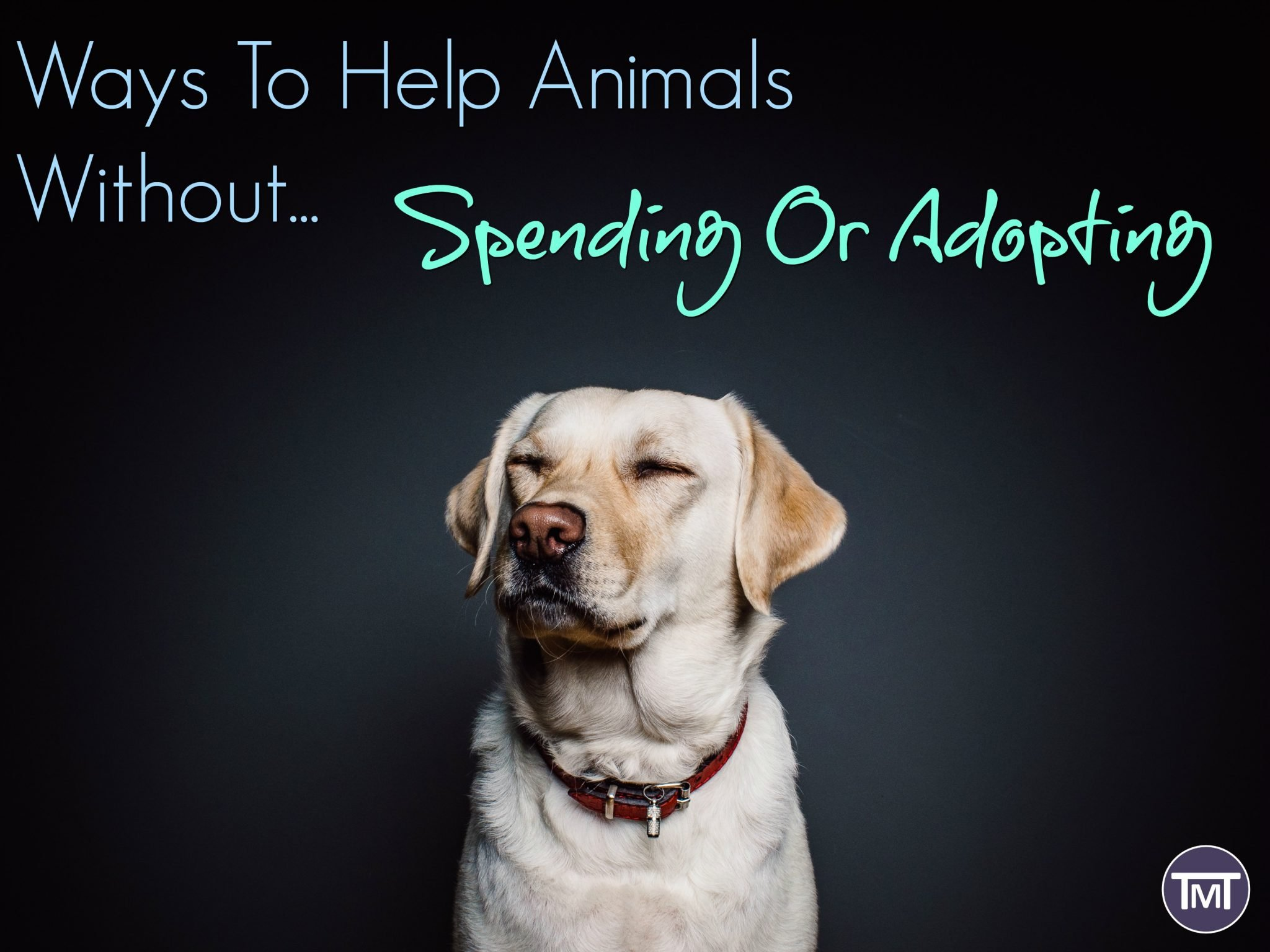 Ways To Help Animals Without Spending Or Adopting