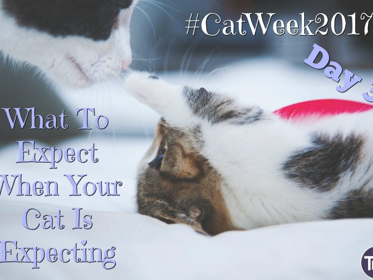 What To Expect#catweek2017 day 3 When Your Cat Is Expecting