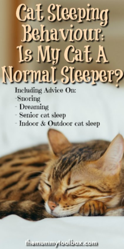 cat sleeping behaviour including whether your cat is a normal sleeper, too much sleeping, snoring, dreaming and sleep in senior cats. #Catweek2017