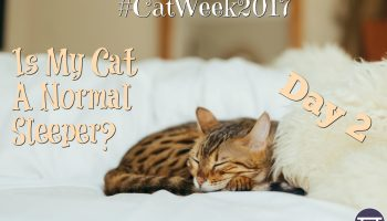cat sleeping behaviour - day 2 #catweek2017 is my cat a normal sleeper?