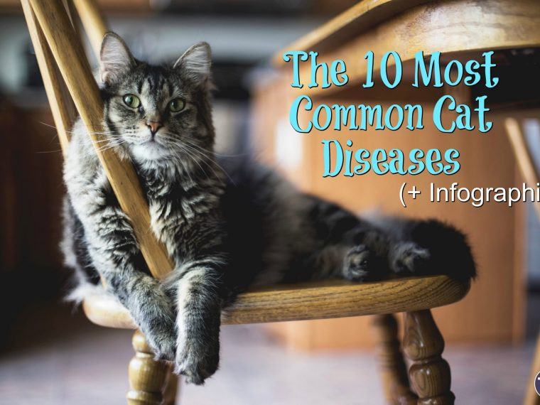 the most common cat diseases feature image