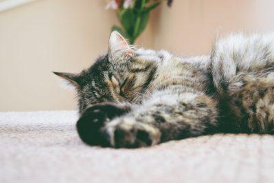 indoor cat lying down - cat debate indoor vs outdoor