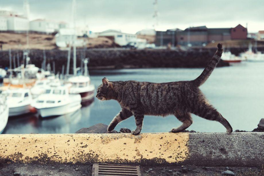 outdoor cat near marina, cat debate