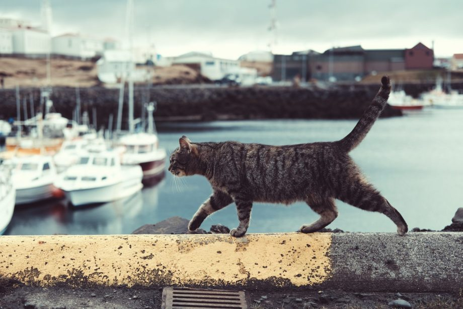 outdoor cat near marina, cat debate