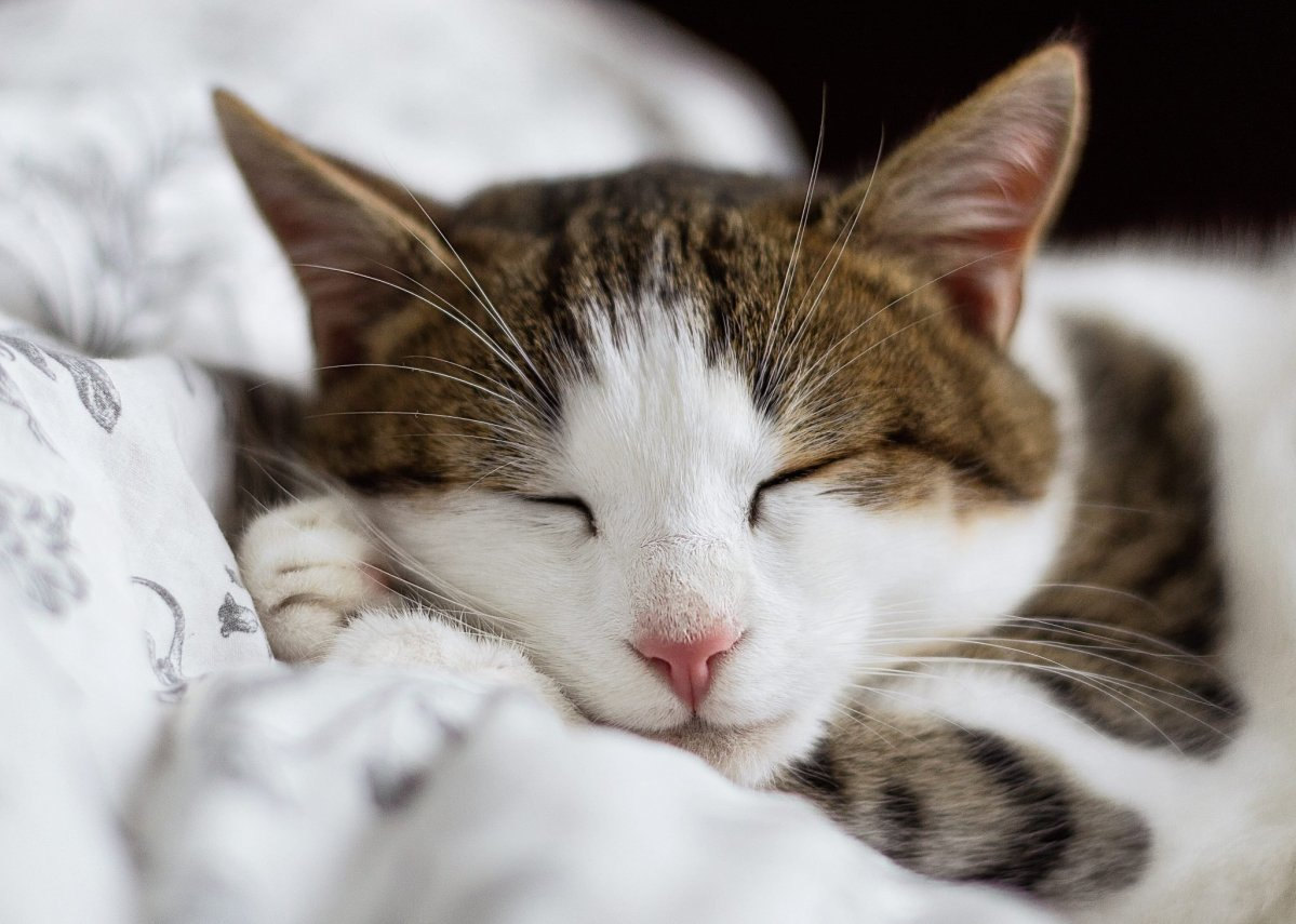Are Essential Oils Harming Cats?