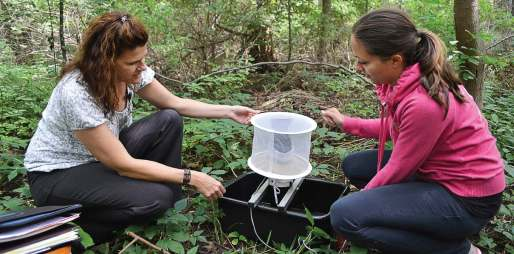 Mosquito traps — like this gravid trap — used to monitor for West Nile disease will be ineffective when monitoring for Zika; instead, BG-Sentinel mosquito traps and Ovitrap cups will need to be used. (Photo by Sarah Wright)