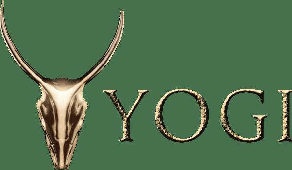 Yogi-Gold-on-White