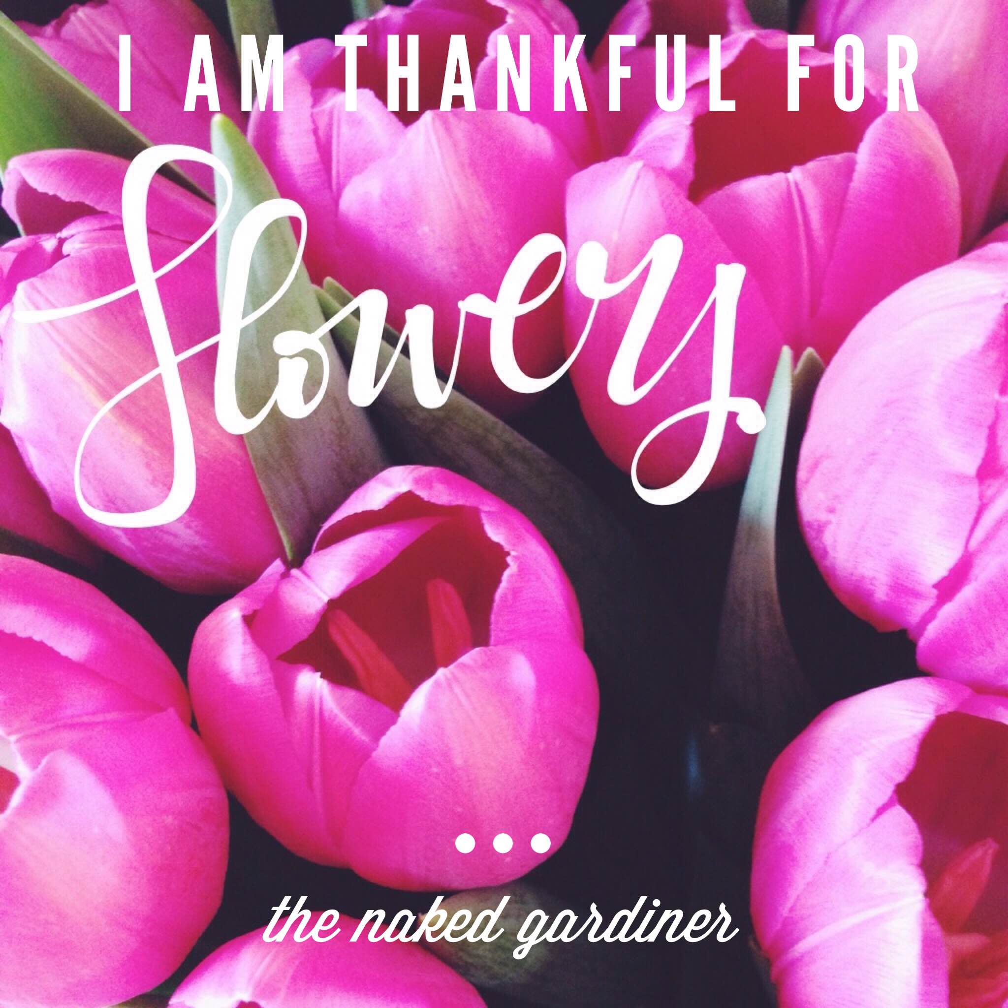 thankful-thursdays-flowers-thenakedgardiner