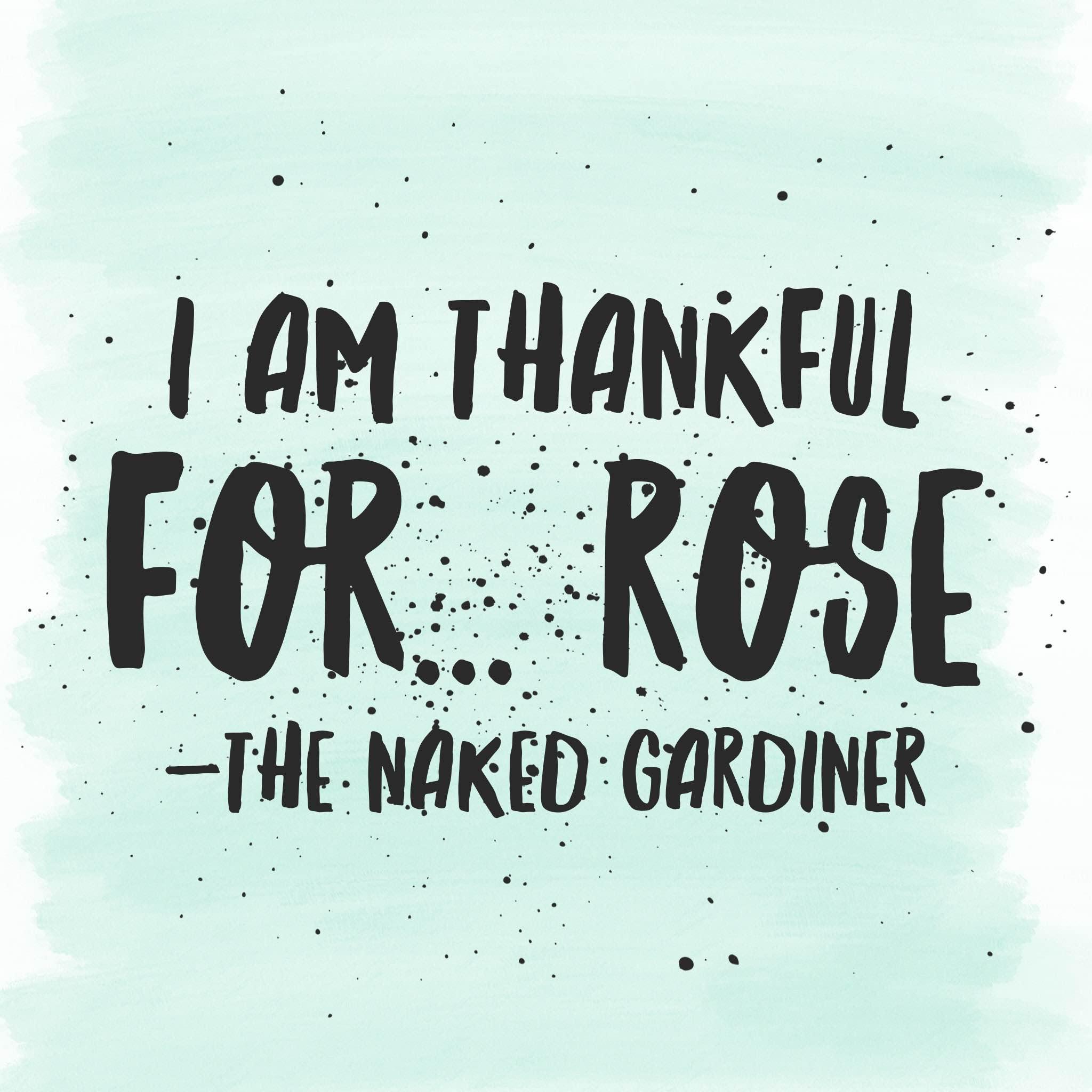 thankful-thursdays-rose-thenakedgardiner