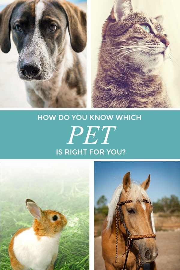 pets graphic