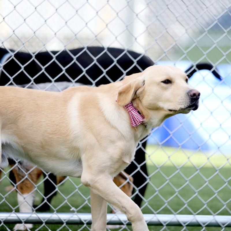Go Dog-West Nashville