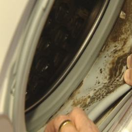 mold whirlpool washers