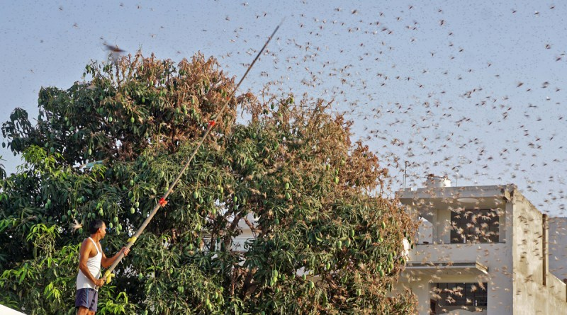 Detailed Analysis of Locust attack in India