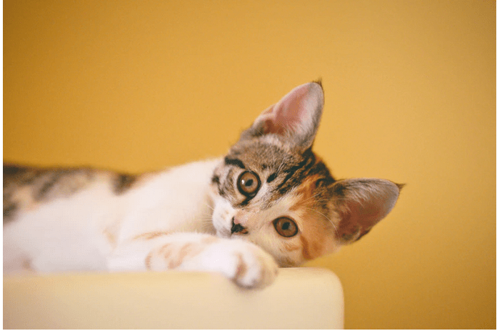 remove allergens from pets