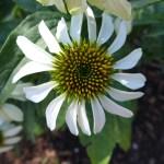 whiteflowerspiral1 zps879d5a85