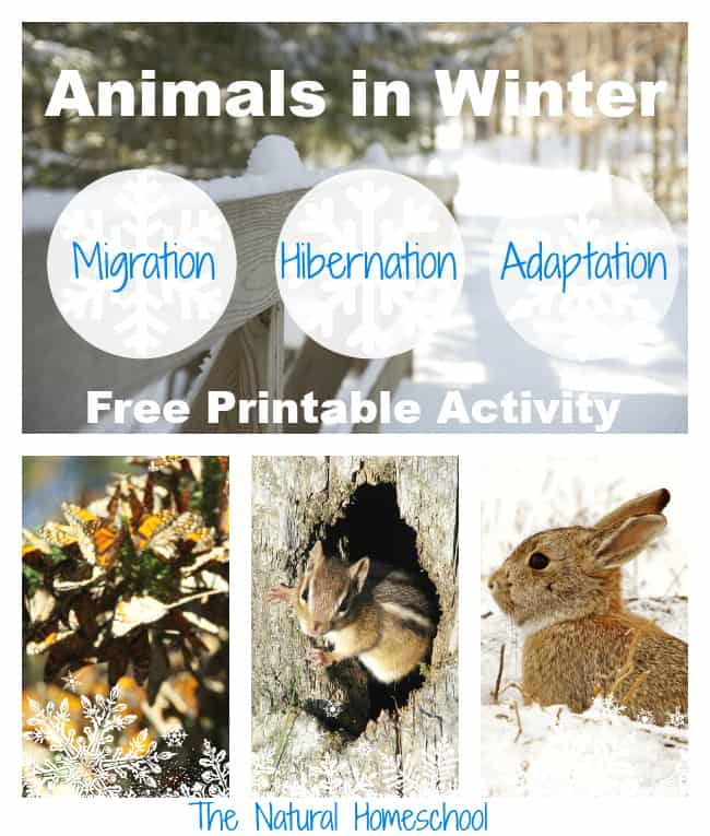 Winter Nature Study Ideas And FREE Printables