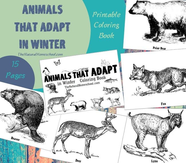 Animals That Adapt In Winter Printable Coloring Pages