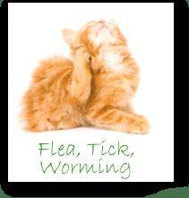 Cat Flea, Tick, Worming