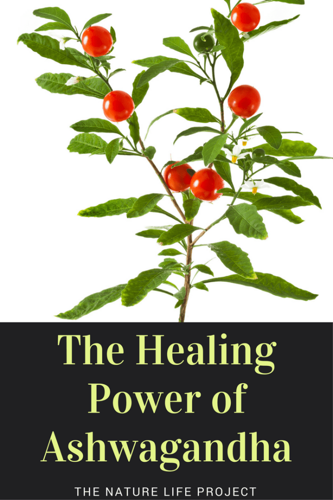 How to use the healing properties of ashwagandha.