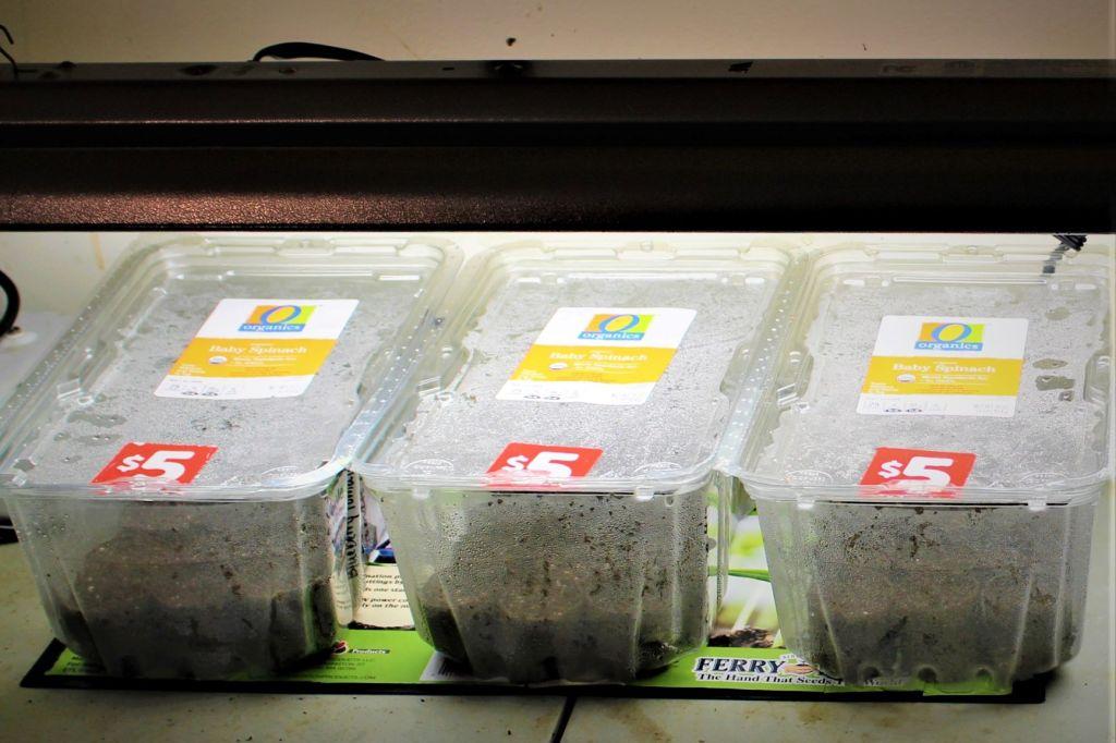 start seedlings cheap