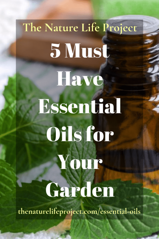 5 Must Have Essential Oils for Your Garden