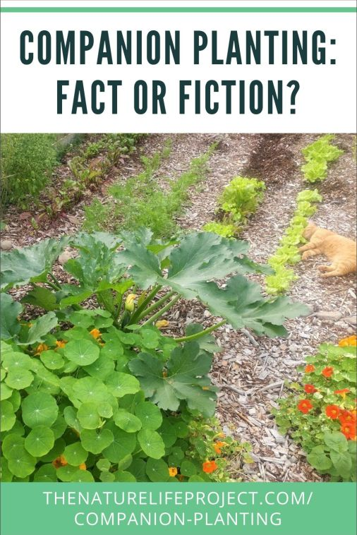 Companion Planting: Fact or Fiction?